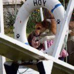 Hoy Hounds hoop